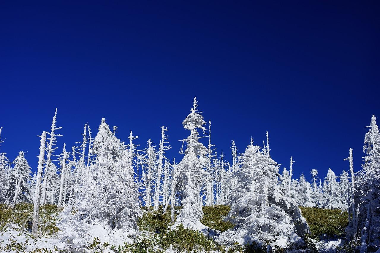 ⑨雪の立枯林