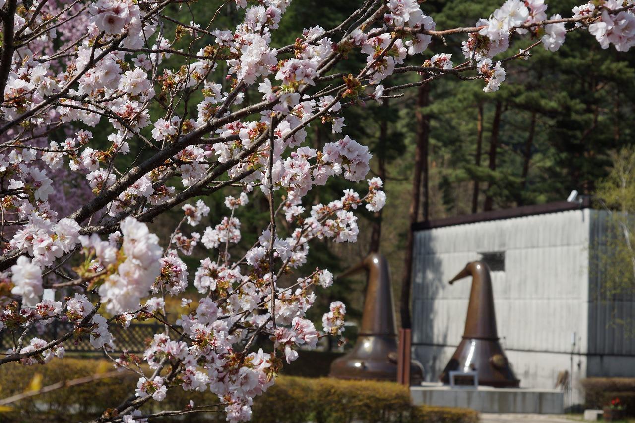 ④蒸留所の春