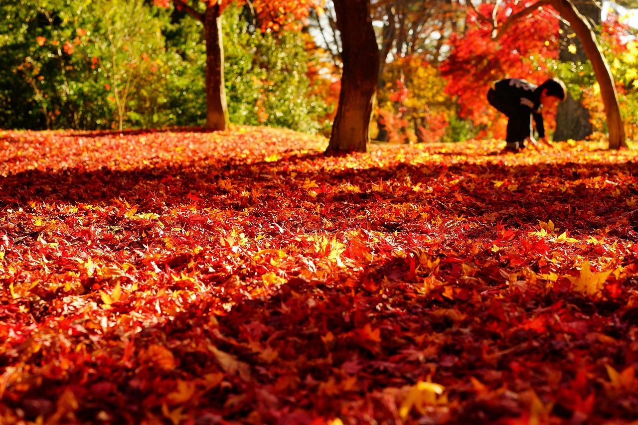 18すごい、真っ赤な絨毯だ!